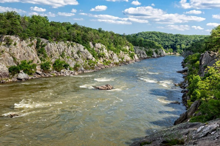 Potomac River Fishing: The Complete Guide